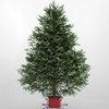Christmas Wreaths And Christmas Trees Fresh Maine Balsam